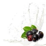 牛奶飞溅莓果 库存图片