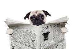 狗报纸 免版税库存照片