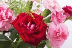 在白色背景隔绝的红色和桃红色玫瑰花束  免版税图库摄影