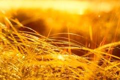трава влажная Стоковое Фото