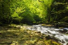 相当小河在一个酥脆绿色森林里 库存图片