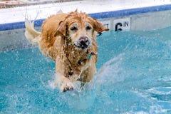 游泳在公共场所的狗 免版税库存照片