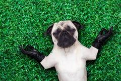 Собака йоги Стоковые Фотографии RF