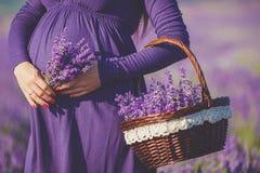 Беременная женщина наслаждается лавандой цвета Стоковые Изображения RF