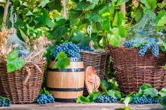 Виноградины и красное вино в плетеной корзине Стоковые Фотографии RF