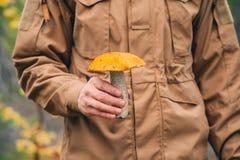 橙色盖帽牛肝菌蕈类蘑菇在人手上 免版税库存图片