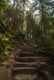 粗砺的石台阶在喀尔巴阡山脉的森林里 免版税库存图片