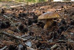 蘑菇等概率圆 免版税库存照片