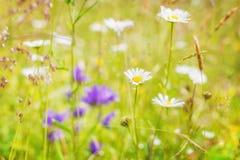 在夏天草甸的惊人的日出有野花的 库存照片