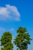 蓝绿色下天空结构树 库存照片