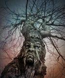 与恼怒的面孔的老可怕树在森林 免版税库存照片