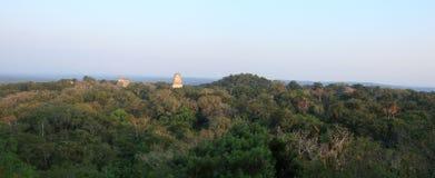 古老玛雅寺庙在密林机盖-蒂卡尔,危地马拉上上升 免版税图库摄影