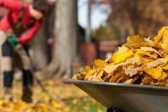 叶子在庭院里 图库摄影