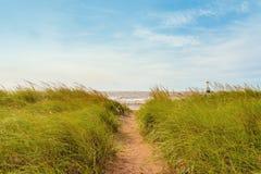 在沙丘的沙子道路与海滩草 库存图片
