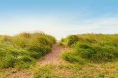 在沙丘的沙子道路与海滩草 图库摄影