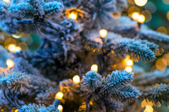 圣诞节冬天绿色树特写镜头 免版税图库摄影