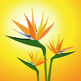 Λουλούδι-διάνυσμα πουλιών του παραδείσου Στοκ Εικόνα