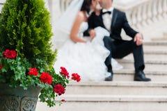 新娘和新郎可爱的场面  免版税库存照片