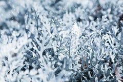 冷淡的早晨本质降雪冬天 在雪飞雪期间的冻植物 库存图片