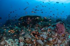 五颜六色的鱼礁石 库存图片
