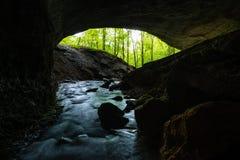 从黑暗的洞的看法到绿色森林里 库存图片