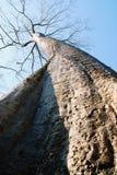 柬埔寨结构树 免版税库存照片