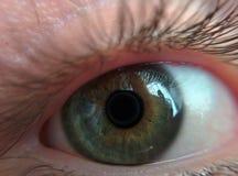 变色蜥蜴眼睛 库存图片