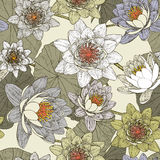 与开花的荷花的无缝的花卉样式 库存照片