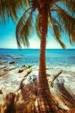Красивый солнечный день на тропическом пляже с пальмой Стоковые Фото