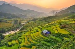 Τομέας ορυζώνα ρυζιού του Βιετνάμ Στοκ φωτογραφία με δικαίωμα ελεύθερης χρήσης