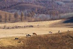 在大草原的牧群 免版税库存图片