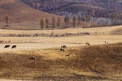 在大草原的牧群 免版税库存照片