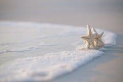 在海海洋的两个海星在佛罗里达,软的柔和的日出靠岸 库存图片