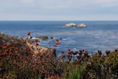 在太平洋海岸的花 免版税库存图片