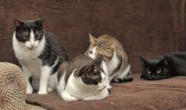 在长沙发的四只猫 免版税库存图片