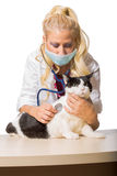 Κτηνιατρική κάνοντας εξέταση της γάτας Στοκ Εικόνα