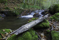 Древесина потоком, Хорватия Стоковое Изображение RF