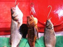 天的抓住,鲜鱼 免版税库存图片