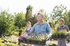 运载有花盆的男性和女性花匠条板箱在植物托儿所 库存照片
