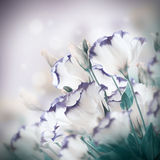 Букет чувствительных роз Стоковые Фото