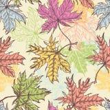 手拉的槭树叶子无缝的样式 图库摄影