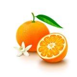 与一半的蜜桔在白色背景的果子和花 免版税库存图片