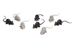 在白色背景-小组玩具老鼠-隔绝的万圣夜 库存照片