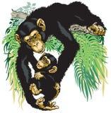 拿着小黑猩猩的黑猩猩 免版税图库摄影