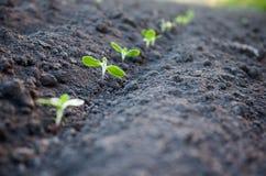 绿色植物成长 免版税库存照片