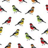 Άνευ ραφής τυπωμένη ύλη πουλιών χρώματος Στοκ εικόνες με δικαίωμα ελεύθερης χρήσης