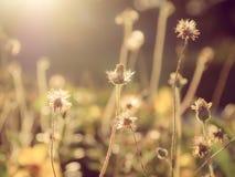 与五颜六色的花的美好的花卉背景…背景 库存照片