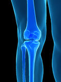 人的膝盖解剖学 库存照片