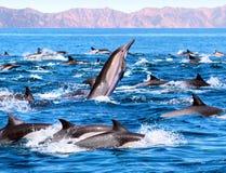海豚巡逻 免版税库存照片