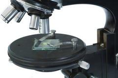 分析的显微镜 免版税库存图片